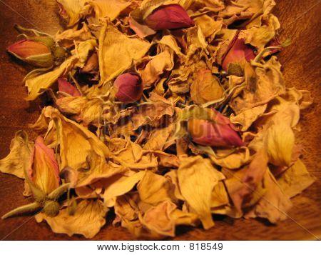 rosepetalsherbology2
