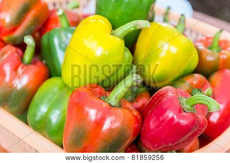 Bell Sweet Pepper Paprika