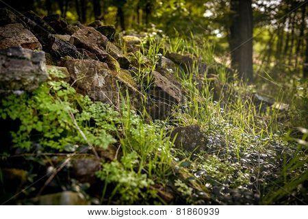 Closeup of some vegetation on stones
