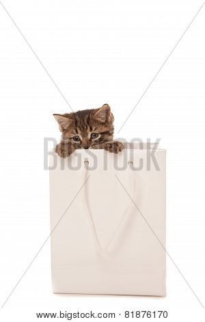 Kitten Playing With White Paper