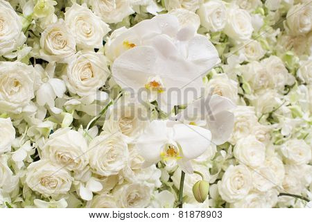 Spring Blossom Background - Abstract Floral Border Of White Flowers