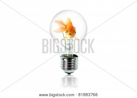 Goldfish In Light Bulb