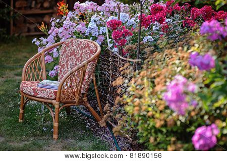 chair in summer garden with blooming phlox flowers