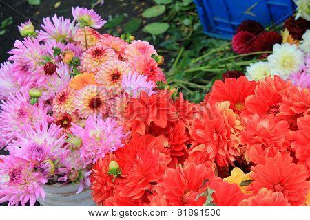 Flower Bouquets At An Urban Farmers Market