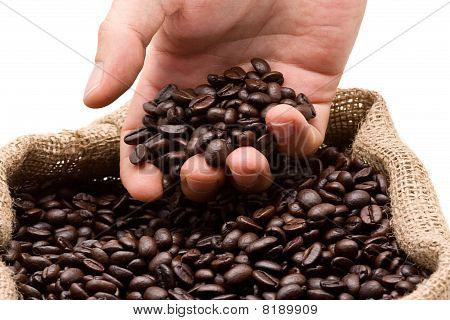 Testing Coffee Beans