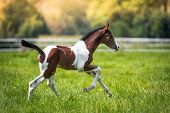 stock photo of foal  - Still very young brown  - JPG