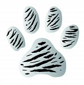 stock photo of white-tiger  - white tiger footprint vector on white background - JPG