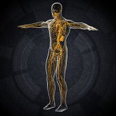 picture of plexus  - 3d render illustration of the male lymphatic system  - JPG