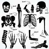 stock photo of knee  - Collection Human Skeleton  - JPG