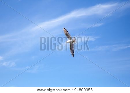 White Big Seagull Flying On Blue Sky Background