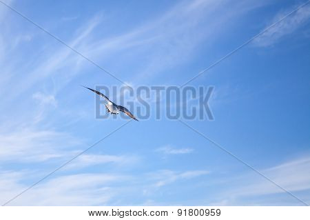 White Seagull Flying Away On Blue Sky Background