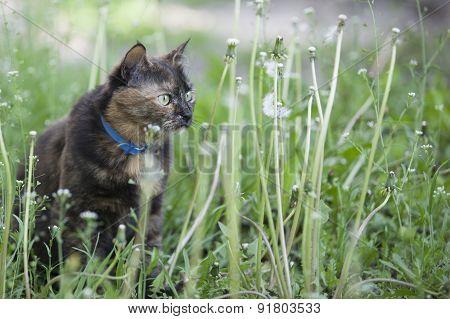 Colored Cat Among Dandelions