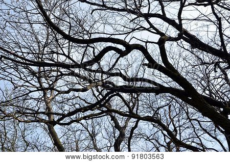 Look Throught The Branches Of Tree To The Sky