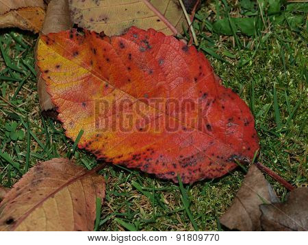 colorful autumn leaves , Southern Bohemia