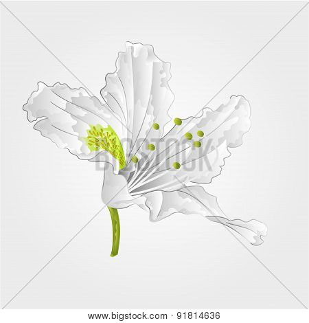 Rhododendron Shrub White Flower Vector