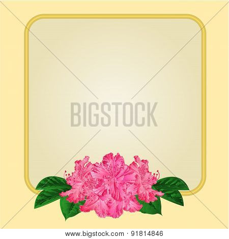 Golden Frame With Pink  Rhododendron Vector