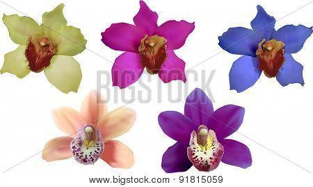 illustration with bright colors orchids collection