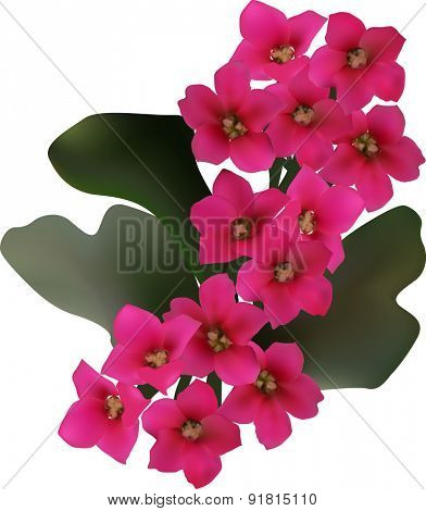 illustration with pink flower isolated on white background