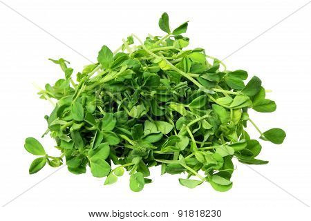 Snow Pea Sprouts