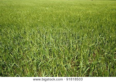 View of a farm field in Zaragoza Province, Aragon, Spain.