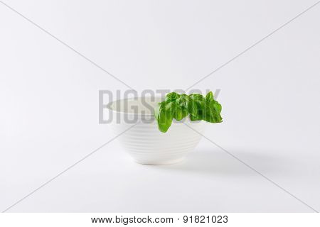 fresh leaves of basil with pure white bowl