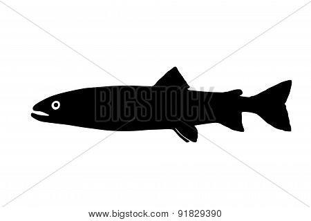 Silhouette Of The Fish  Huchen