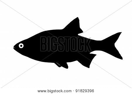Silhouette Of The Fish Ide (orfe)