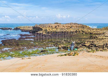 OUALIDIA, MOROCCO, APRIL 6, 2015:  fishermen looks for seafood on beach (Atlantic coast)