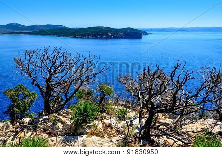 Ocean Landscape With Dry Trees And Bushes, Sardinia