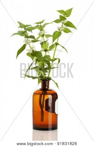 lamium album plants in old apothecary bottle isolated on white background