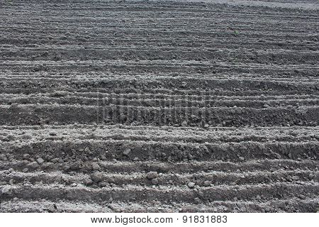 Plowed Land Ready For Planting Potato In The Village
