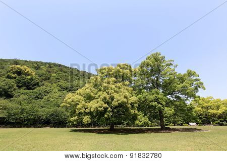 park with green field and tree