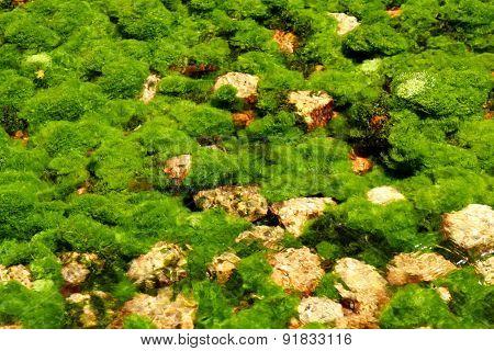 underwater river's plants