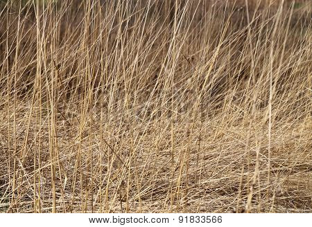 Dry Grass In A Field