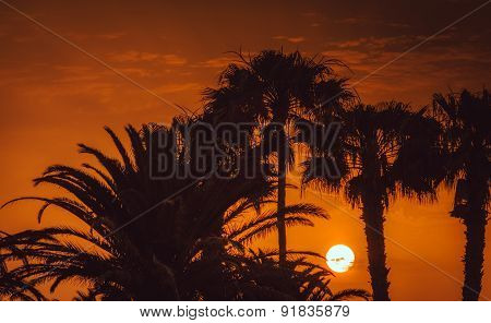 Sunset over palmtrees
