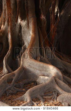 Swirling Tree