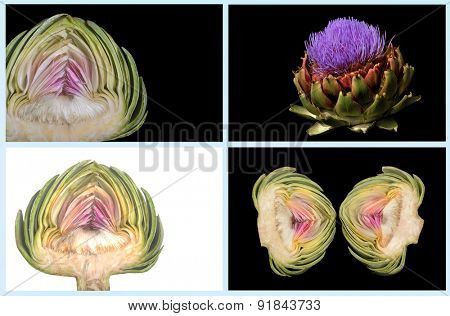 Very Nice Useable Image of a collage of artichokes