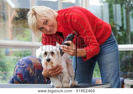 Smiling Blonde Woman Is Grooming A White Maltese Dog