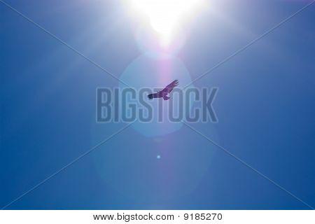 Condor Sun