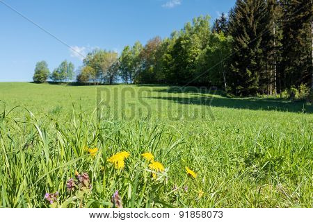 Spring Countryside With Flowers, Meadow, Trees And Blue Sky