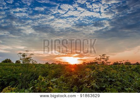 Sunset On Field Background