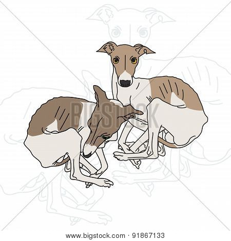 Vector illustration of two Italian greyhound spotted