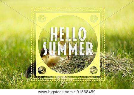 Hello summer concept. Little cute ducklings on green grass, outdoors