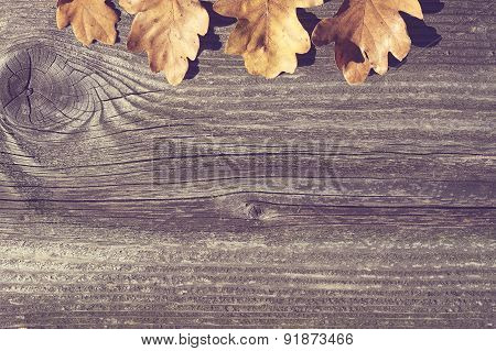 Vintage Board With Oak Leaves Concept
