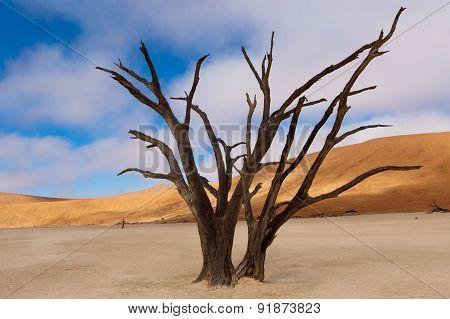 Landscape of Dead Vlei, Sossusvlei, Namib desert, Namibia, South Africa