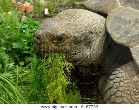 Turtle Eats Grass