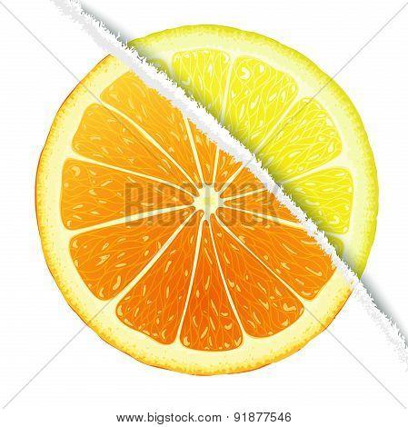Lemon-oranges design