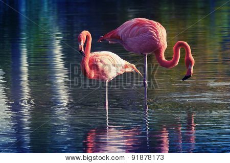 Two Pink Flamingos Standing In The Water