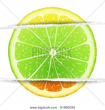 Triple citrus fruit