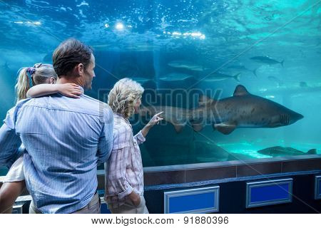 Wear view of family looking at shark in a tank at the aquarium